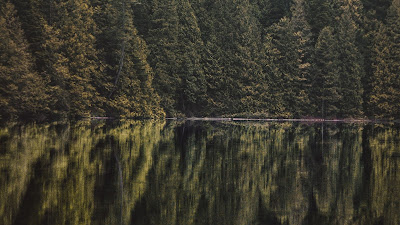 HD Wallpaper Lake, Forest, Trees, Reflection