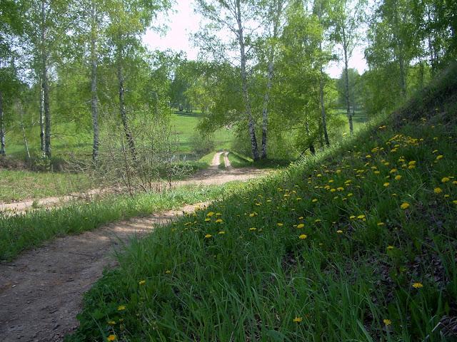 Новосибирская область, Жеребцово – в лесу