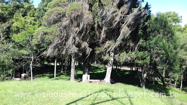 Árvores cobertas por musgos às margens da BR-116