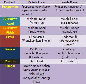 Apa itu Metabolisme Tubuh dan Proses Pembentukan Energi