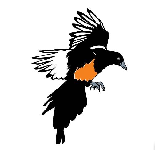 custom logo design bird ply