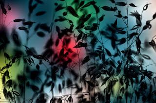 Green Pear Diaries, fotografía, Luis Mariano González, naturaleza