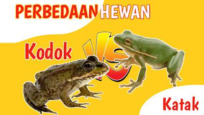 perbedaan katak dan kodok meskipun satu ordo anura