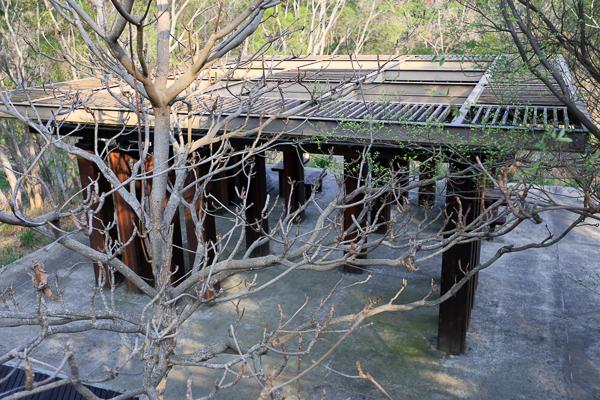 台中西屯中科東大公園400公尺九重葛花牆 、諾亞方舟步道散步