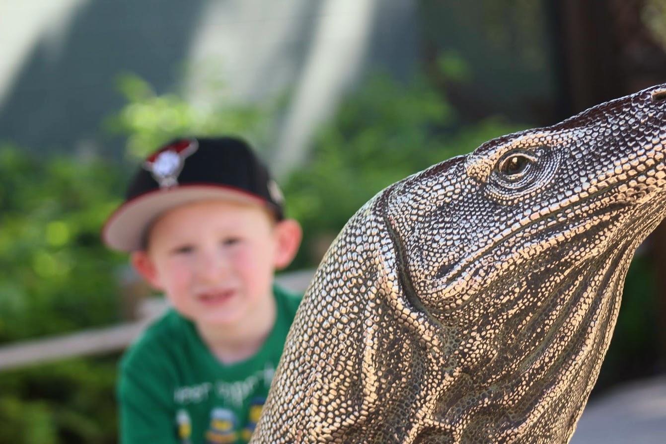 phoenix zoo lizard benjamin
