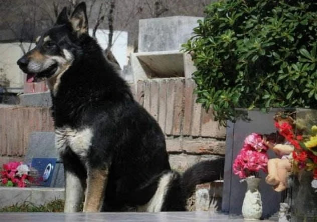 The 10 most fulfilling dogs in the world ... very impressive stories of their loyalty