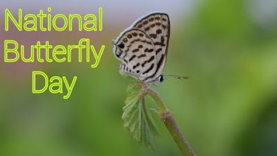 We will make national butterfly of india and where national butterfly center