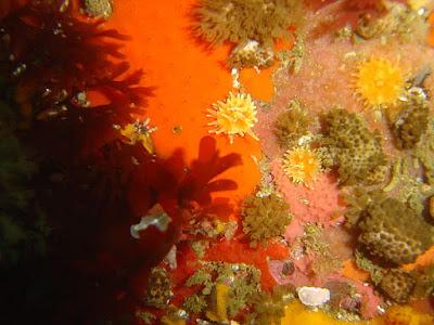 vulcan-rock-reef-life