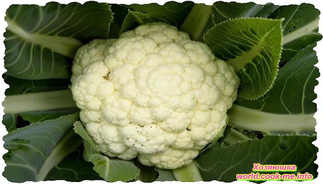Совет по посадке цветной капусты для хорошего урожая.