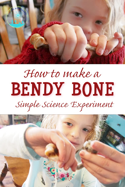 Simple Science Experiment to Learn What Makes Bones Hard