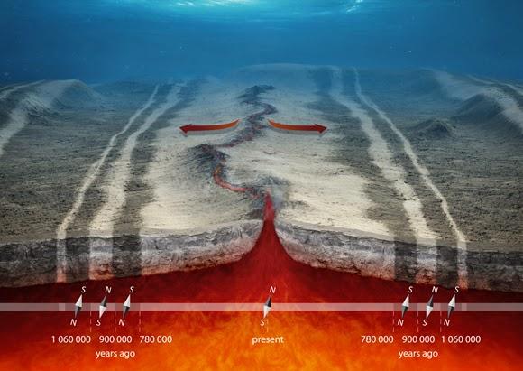 القشرة المحيطية