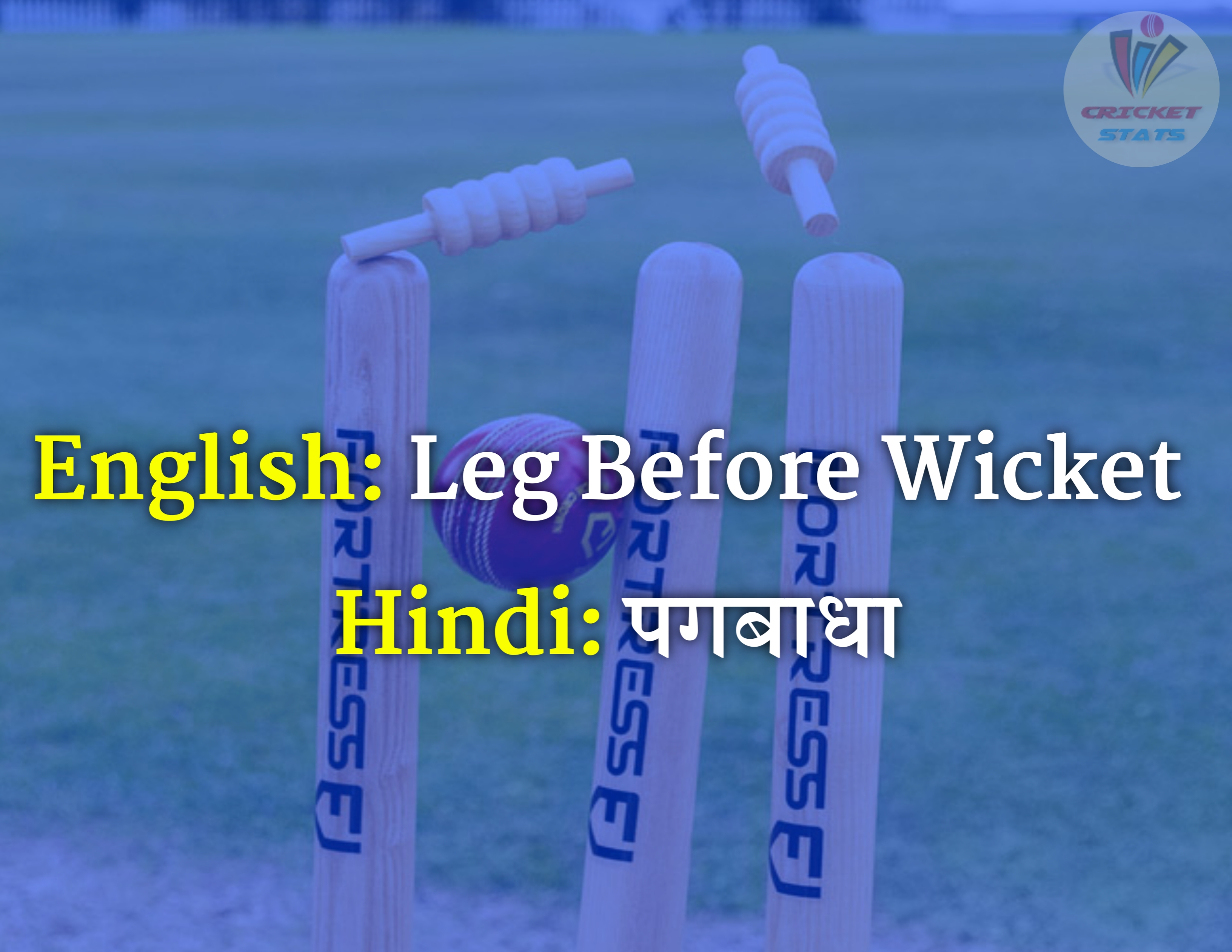 50 english worlds meaning that use in cricket