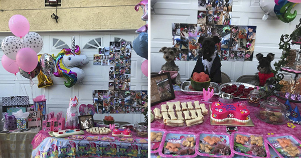 🔥 Mujer planea durante 6 meses fiesta de cumpleaños a su Perro