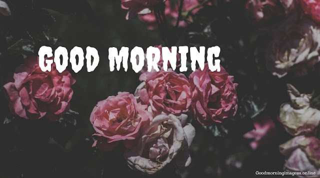 Good Morning Images In Roses 9