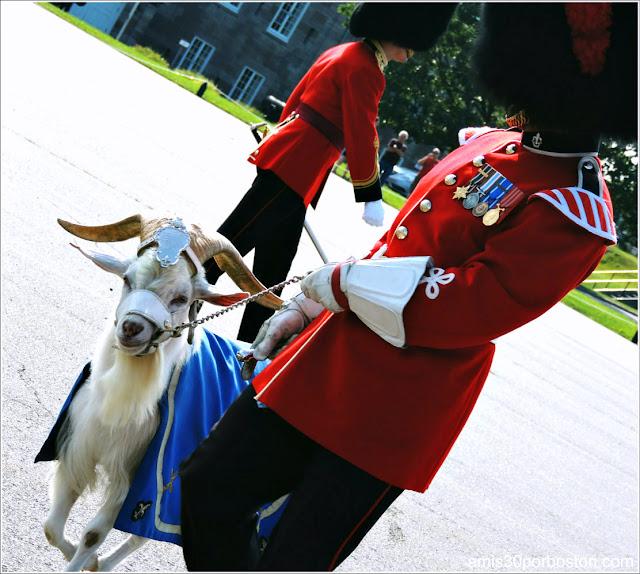 La Mascota Batisse de la Ciudadela de Quebec