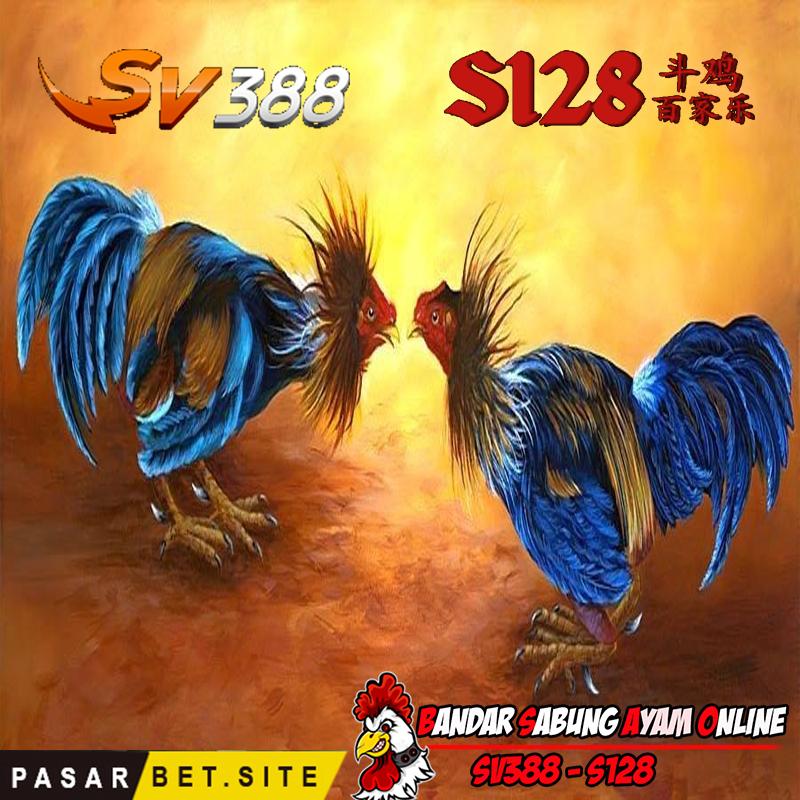 Bandar Sabung Ayam Online Cara Bermain Judi Sabung Ayam Online Sv388