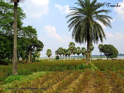 Sadullapur rose garden, Dhaka