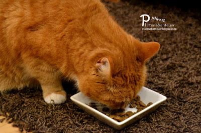 Katze Mimi testet das Futter Wahre Liebe für feinsinnige Gourmets