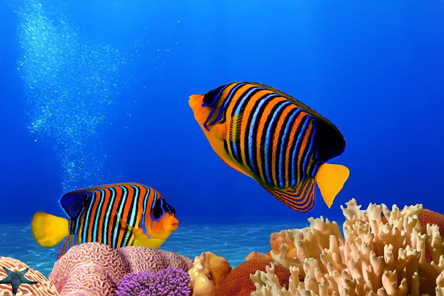 Hermosa Arrecifes De Coral Para Colorear E Imprimir Viñeta ...