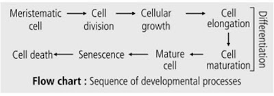 sequence of developmental processes