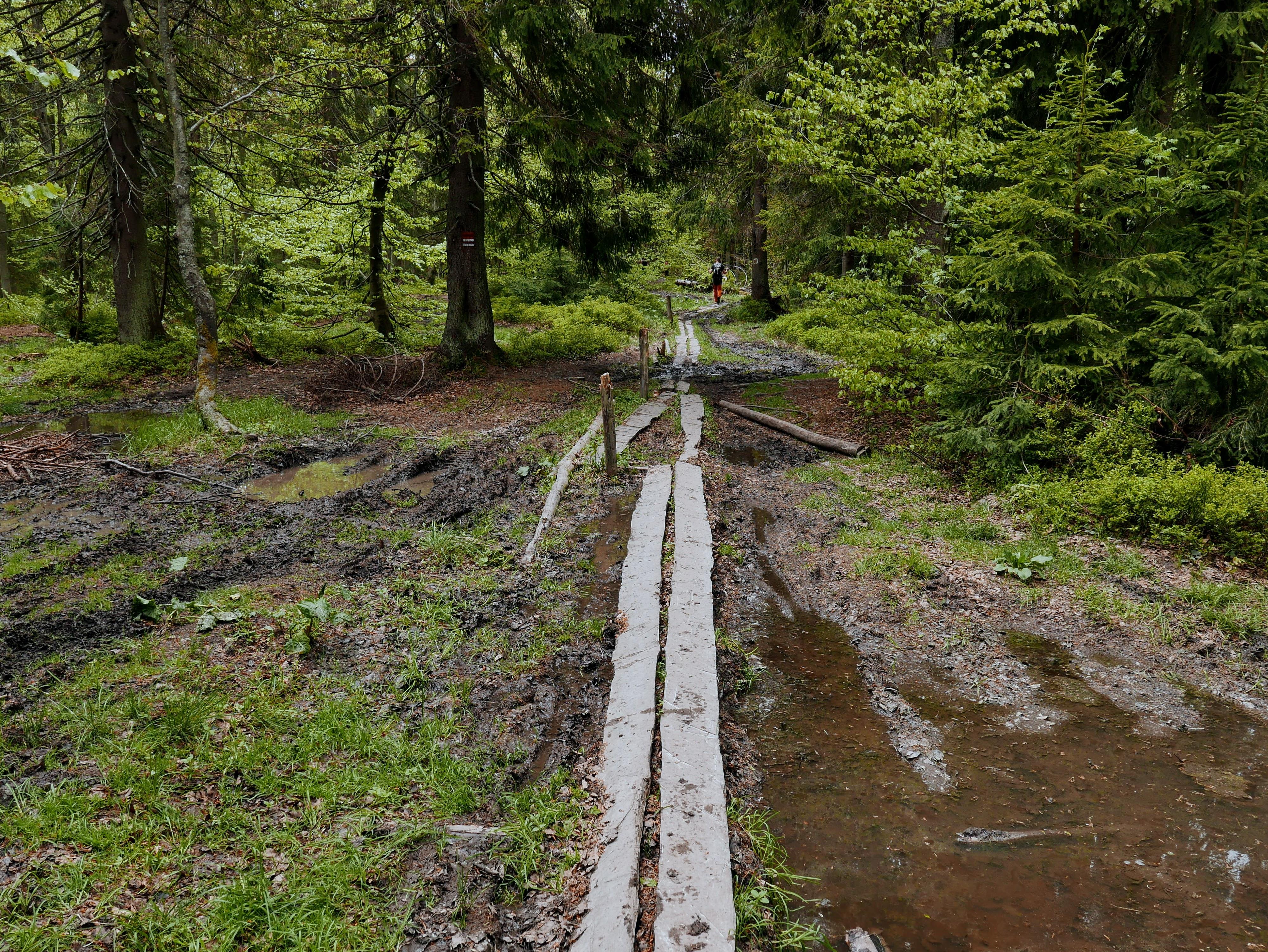 Beskid Żywiecki: Pilsko - Rysianka, Główny Szlak Beskidzki