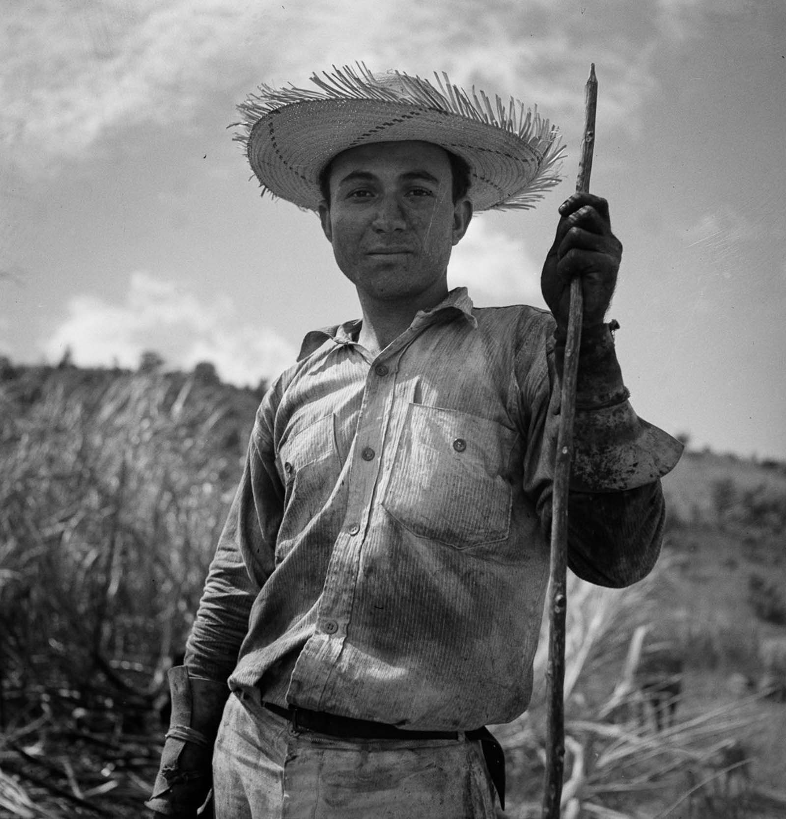An ox cart driver in a burned sugar cane field near Guanica.