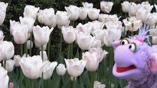 Murray and Ovejita learn about flowers and how to plant one, Sesame Street Episode 4403 The Flower Show season 44