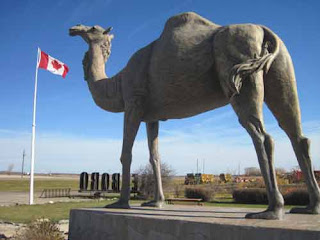 Sara The Camel Is Proudly Canadian In Glenboro, Manitoba.