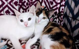 पालतू जानवरों के नाम हिंदी और इंग्लिश में ▷ Pets Names