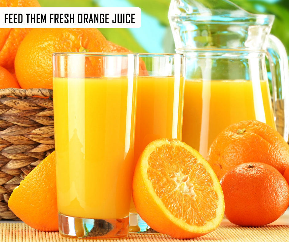 Feed Them Fresh Orange Juice