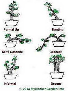 Picture of Bonsai Shapes