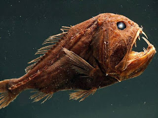 The Scariest Fish in The World