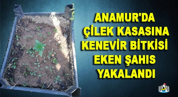 Anamur Haber, Asayiş, Anamur Haberleri, Anamur Son Dakika, D.KÖYLER,