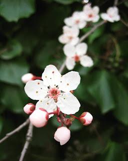 Flower Essence Certificate Classes