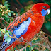 17 Different Types of Parrots -With Images and Explanation - Different Species of Parrots!