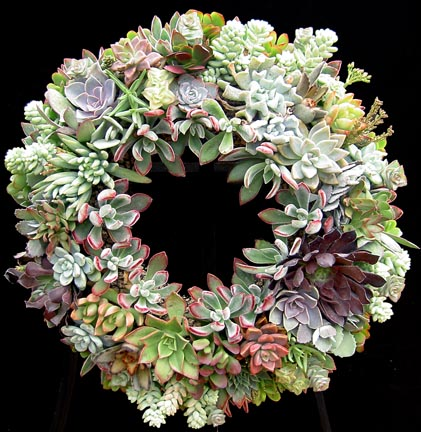 This stunning succulent wreath is so colorful and bright!