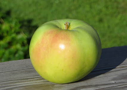 Green-yellow apple with faint small blush.