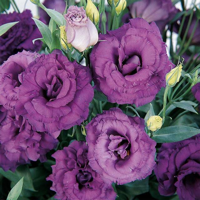 flor casamento