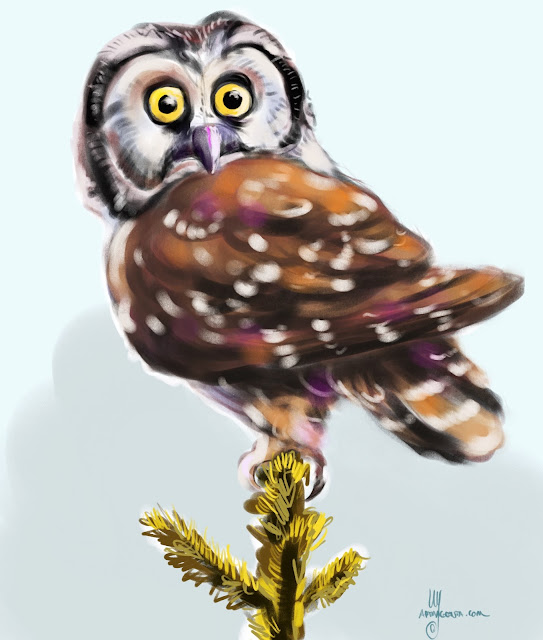 Boreal Owl bird painting by Artmagenta