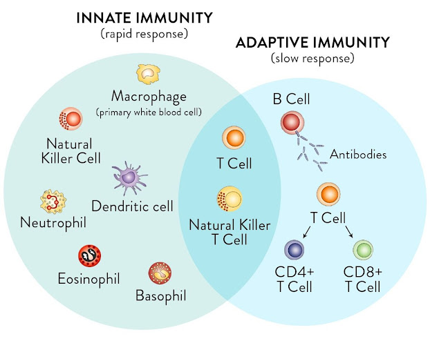 Immunity can be defined as the way in which the body can protect itself from invasion by pathogenic microorganism