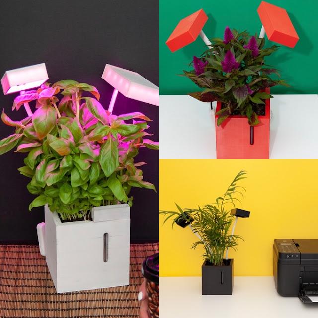 QBUX smart indoor farming