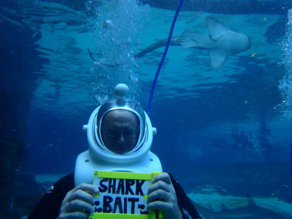 Best Dolphin Snorkel Tours Oahu