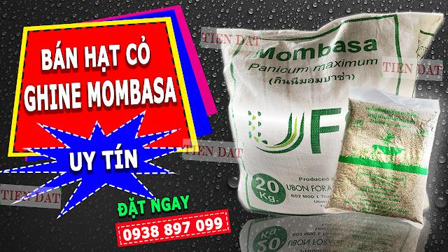 Giống Cỏ Ghine Mombasa Có Xuất Xứ Từ Đâu ??