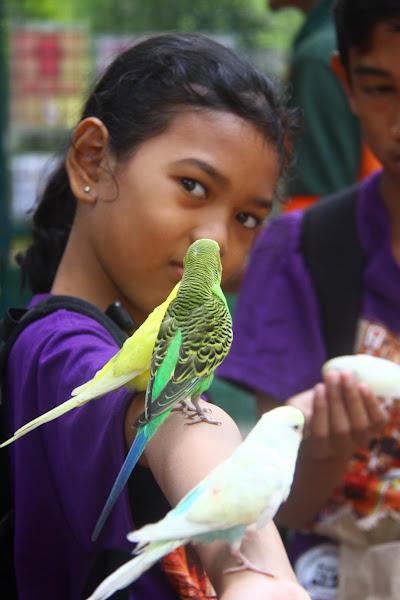 Burung di lengan