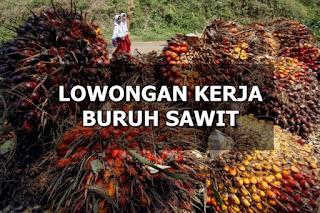 Lowongan Kerja Buruh Sawit PT.Rezeki Kencana Kubu Raya Kalbar