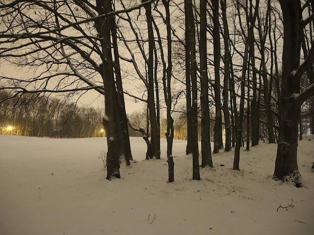 sneeuw op de nachtelijke bremweide in deurne