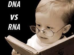 Tabel Perbedaan DNA dan RNA