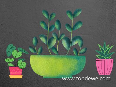 Menjual tanaman hias_Ide usaha rumahan ibu rumah tangga