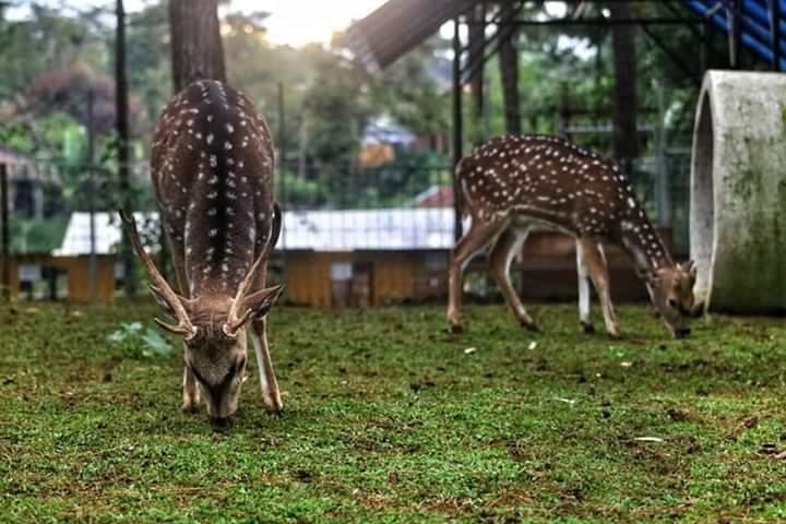 Kebun Binatang Nyalindung