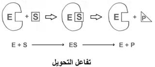رسم تخطيطي لتفاعل تحويل
